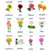 MFM TOYS Flowers and Vegetables Bilingual (Hindi+English) Magnetic Flashcards